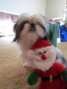 Christmas Fun with the Furbabies