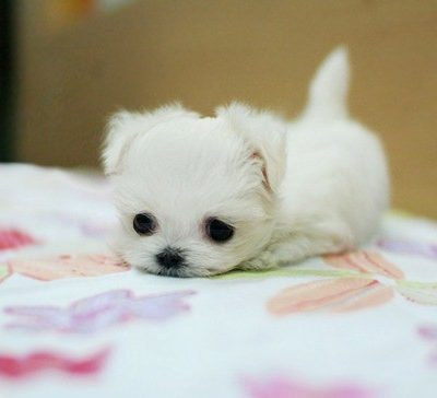 Super Cute Baby Puppies That Will Melt Your Heart