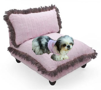 Designer Chairs for Dogs