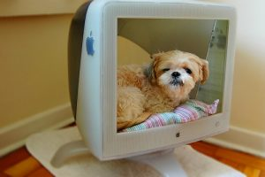 lhasa Apso Sleeping in a Computer Bed