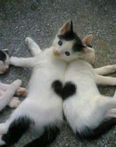 Cats in Hearts