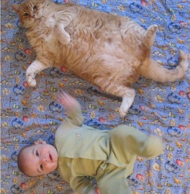 """Cat Funnies – """"I Think I Might Like This Baby"""""""