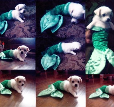 Who is Cuter – Mermaid Puppy or Baby?