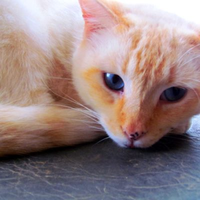 My Kitty Brother – Mr. Pumpkin's Gorgeous Blue Eyes