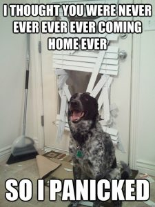 """Funny Dog Picture – """"I Thought You Were Never Coming Home . . ."""""""
