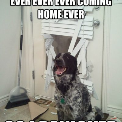 "Funny Dog Picture – ""I Thought You Were Never Coming Home . . ."""