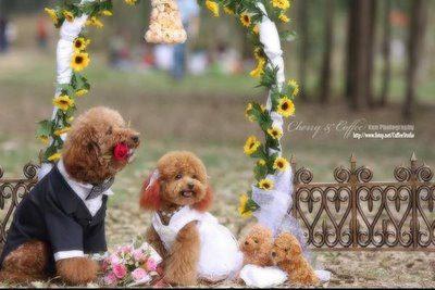 When Dogs Get Married . . . It's Pretty Darn Cute