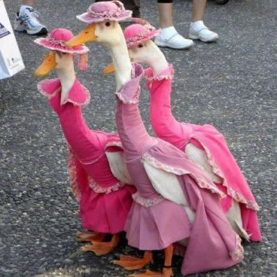 Oh My Dog … Ducks in Pink Dresses and Bonnets