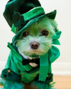 Dogs Gone Irish for St. Patrick's Day