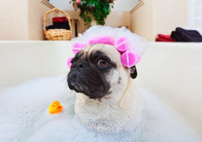 Surprisingly Effective Ways to Improve Your Dog Bath