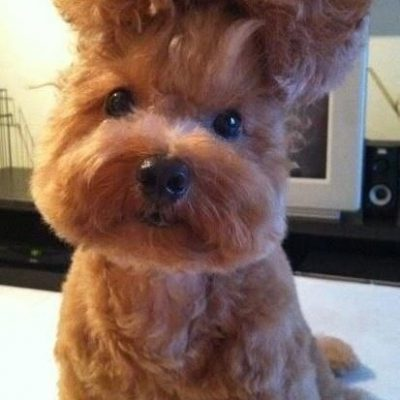 Crazy, But Super Cute Doggie Updo