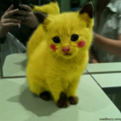 Pikachu Kitty is Super Cute