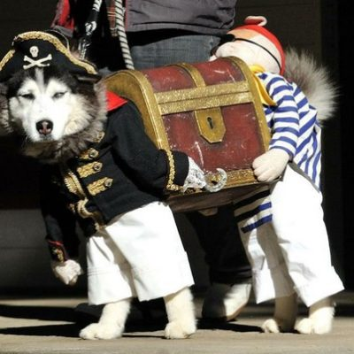 The Pirate Husky