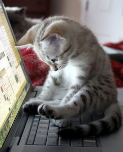 A Real Life Tweeting Cat