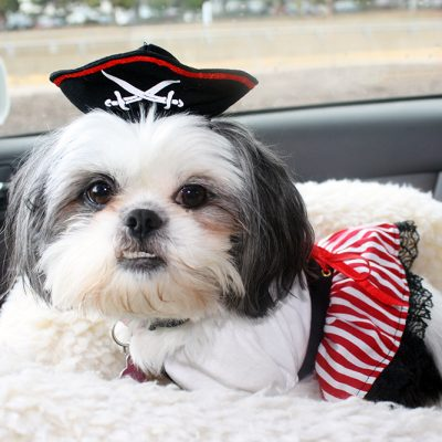 Ahoy mates! Happy Halloween!