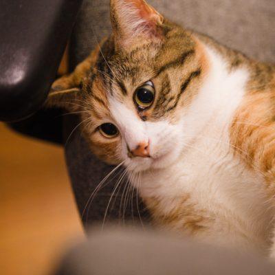 Crazy Clementine Cat